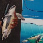 turtle release gili air gili islands 2