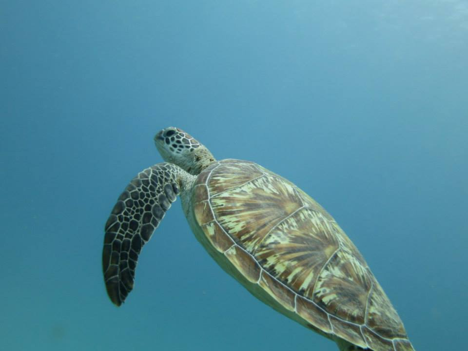 Diving around the Gili Islands with IDC dive resort Oceans 5 Gili Air Indonesia