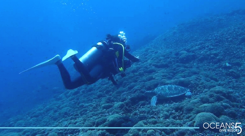 Diver hovering with a turtle below on the reef.