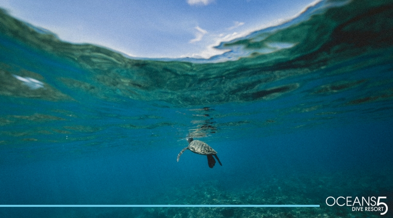 Turtle under the surface..