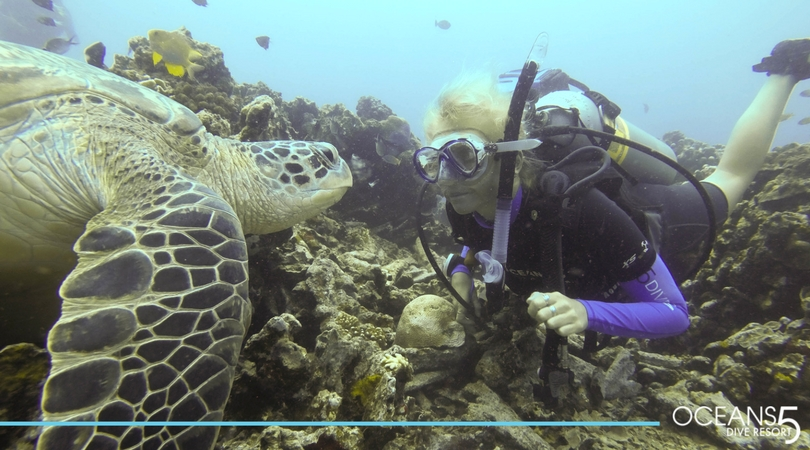 scuba diving and a turtle