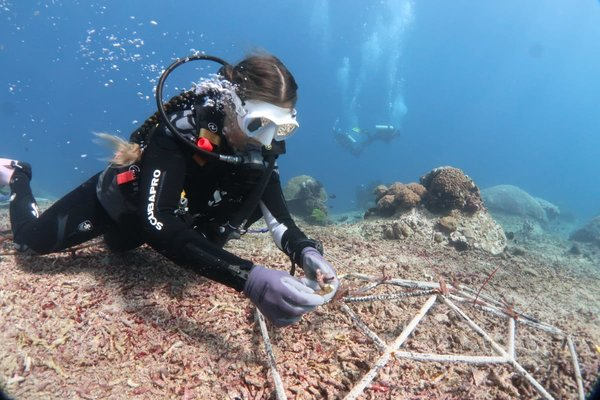 Reef Conservation Indonesia